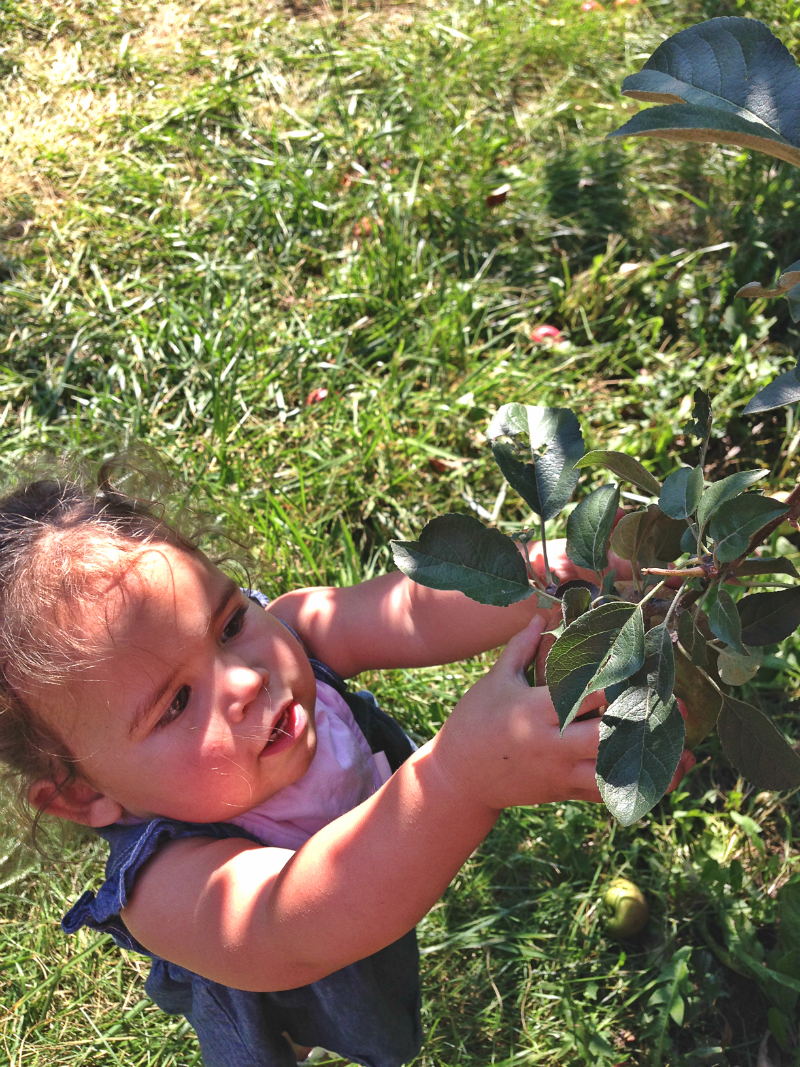 emmy picking apples